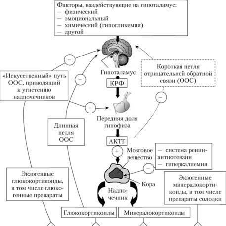 Нарушение механизма регуляции выделения глюкокортикоидов при длительном приеме таблетированных препаратов гортикостероидов – причина синдрома отмены.